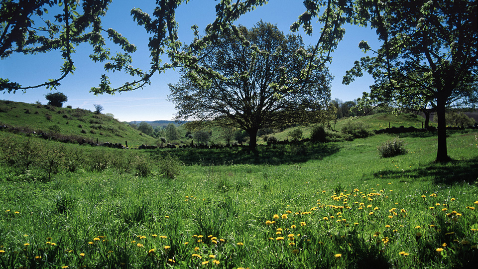 Sommargrönska i Brösarps södra backar. Foto: Jan Videvik/Videviks Foto