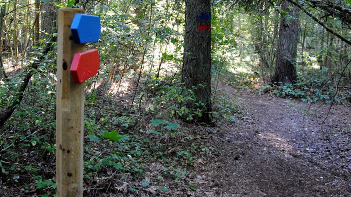 Motionsspåren i skogen restaurerades och märktes upp med ny blå och röd färg. Ingen ska längre springa vilse i skogen.