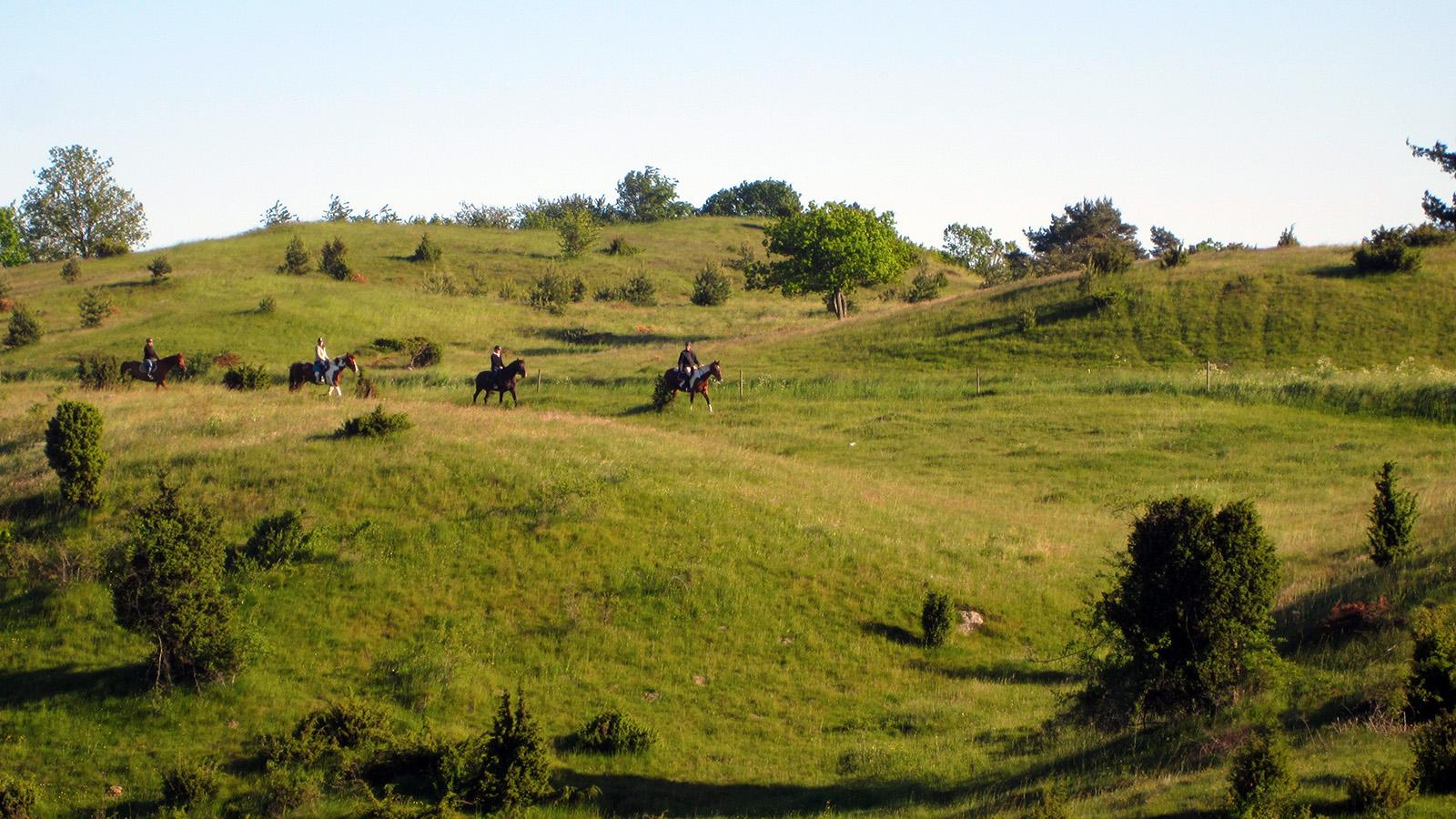 Upplev samma landskap som Skorpan och Jonathan i Bröderna Lejonhjärta! Här finns turridning med både islandshästar och irländska sporthästar. Foto: Stall Torparebron