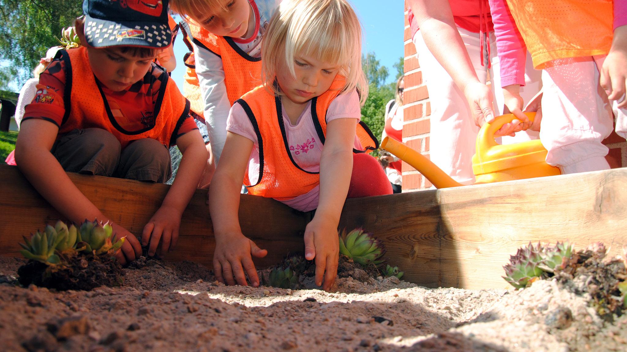 Under invigningen av I Ur och Skur-förskolans vindskydd fick barnen plantera taklök, precis som vi gjorde på vindskyddets sedumtak. Därefter kalasade alla på taket genom Eve Maltais kulinariska taklökswok.