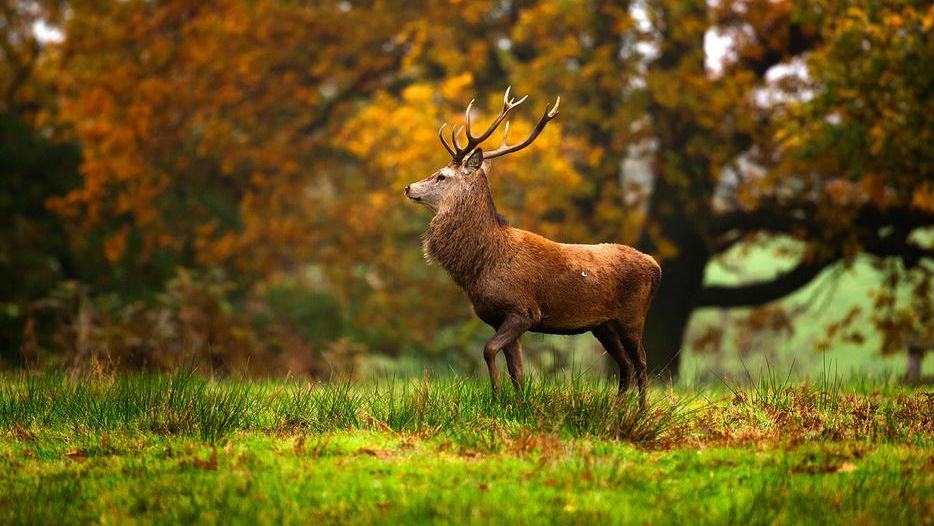 Faunan är rik i Verkeåns naturreservat. Har du tur får du se Skånes landskapsdjur, kronhjorten.