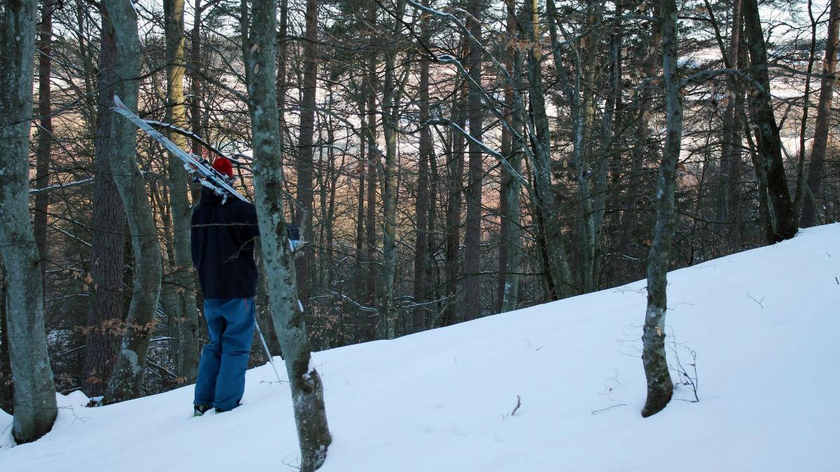 Utförsåkning i gles bokskog som för några hundra meter för tankarna till Hokkaido.