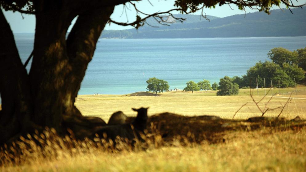 Haväng är en sandstäpp, en mycket sällsynt vegetationstyp som för tankarna till Pampas. Foto: Christel Lindholm, STF Haväng