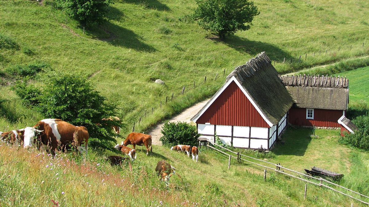 Backaleden passerar runt husknuten på Lindgrens länga, Havängs utemuseum. Foto: Jan Jonasson/Havängs museiförening