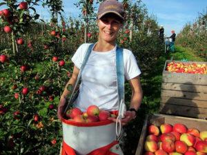 Att vara ung och äppelodlare @ Församlingshemmet | Skåne län | Sverige