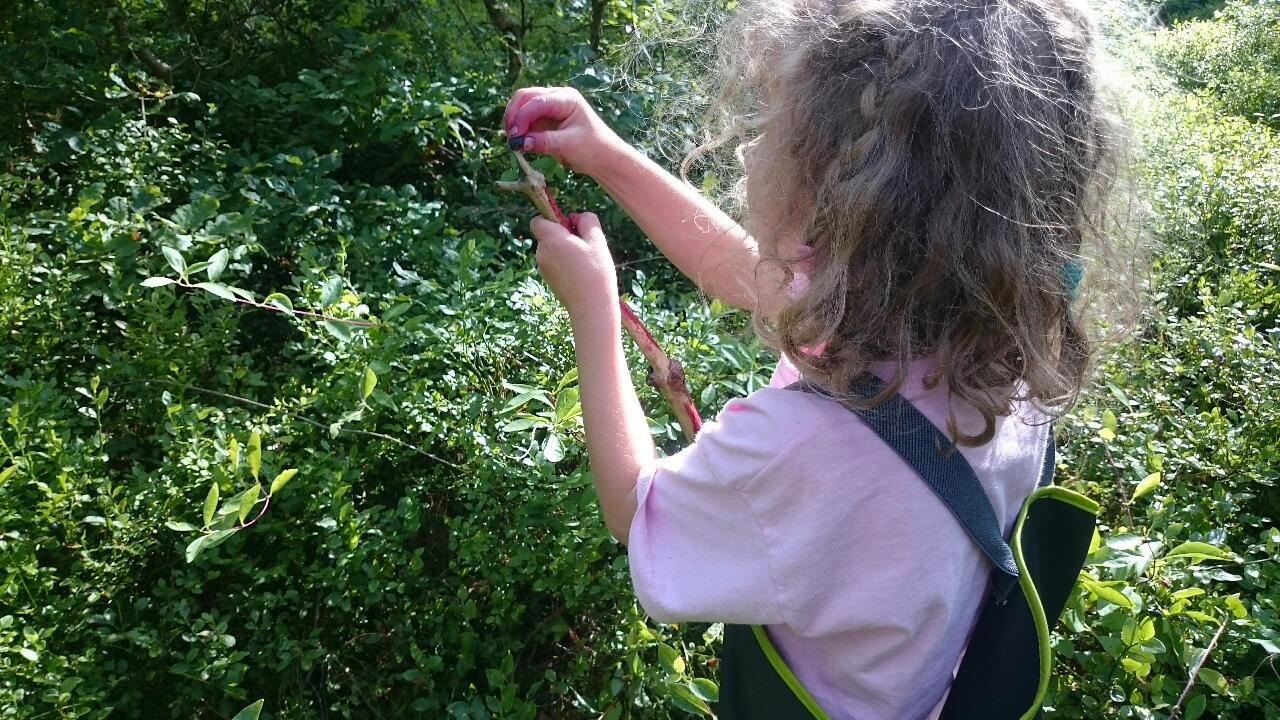 Skogarna runt Brösarp dignar av blåbär just nu.