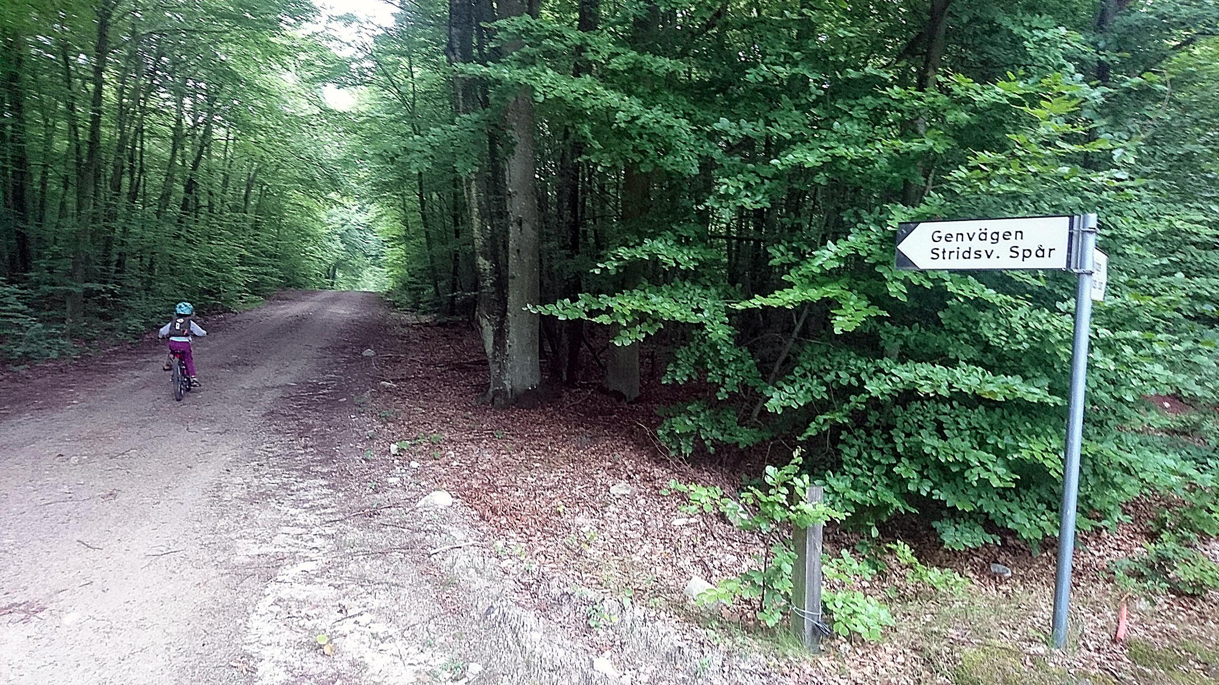 Genvägen genom bokskogen.