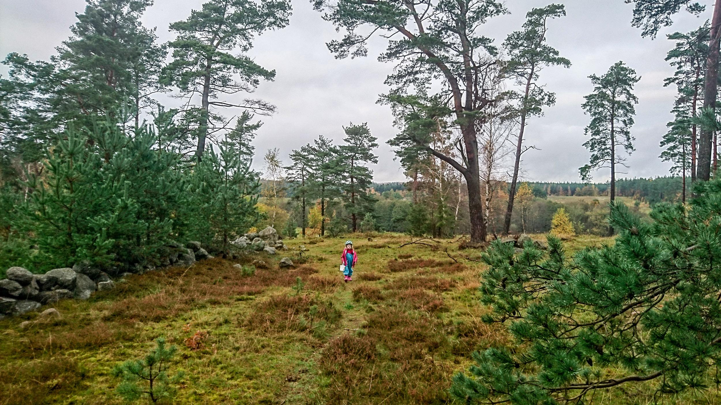 Det finns gott om hedmark runt Brösarp.