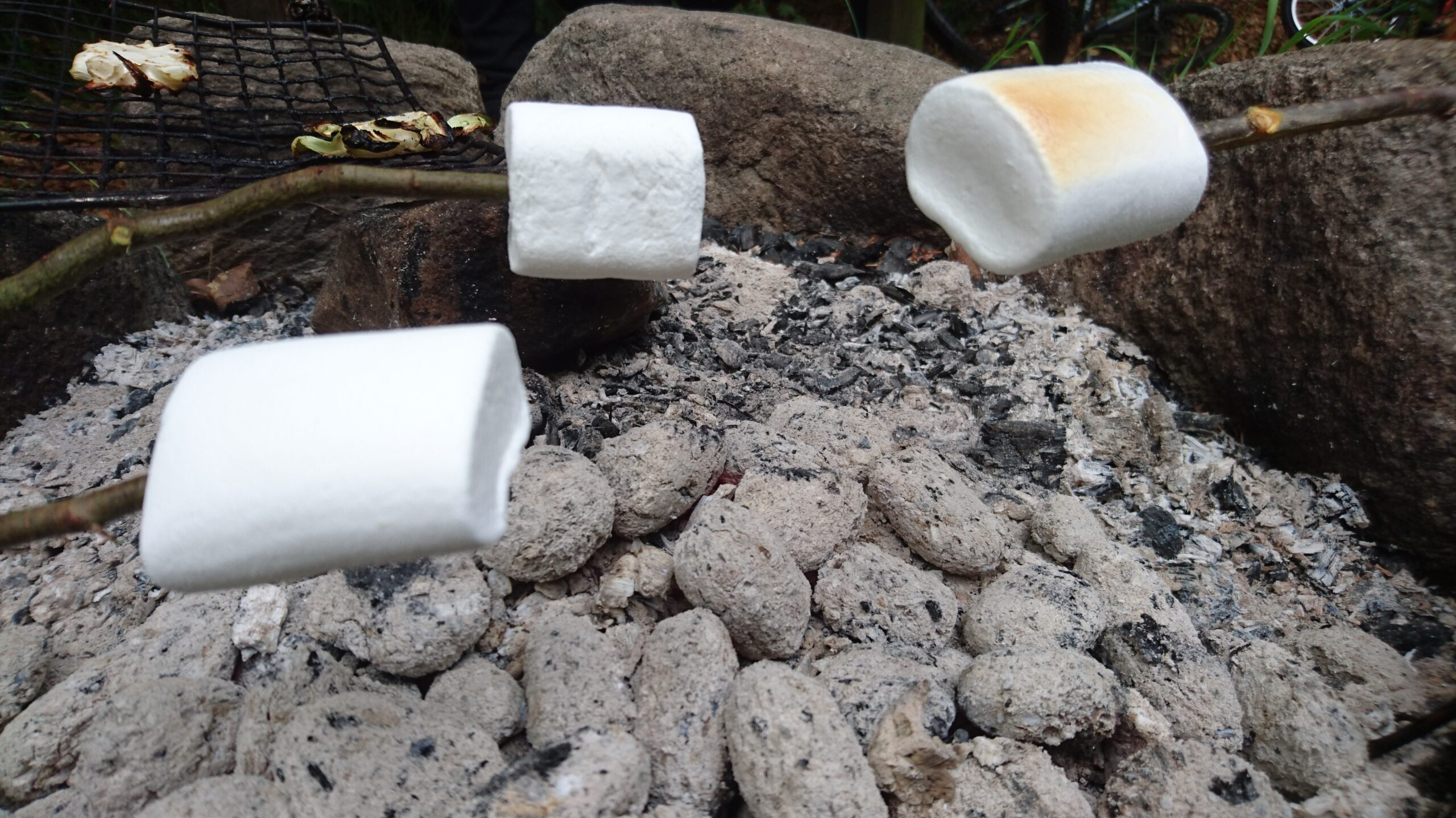 Mmm ... marshmallows i Tockabjär.