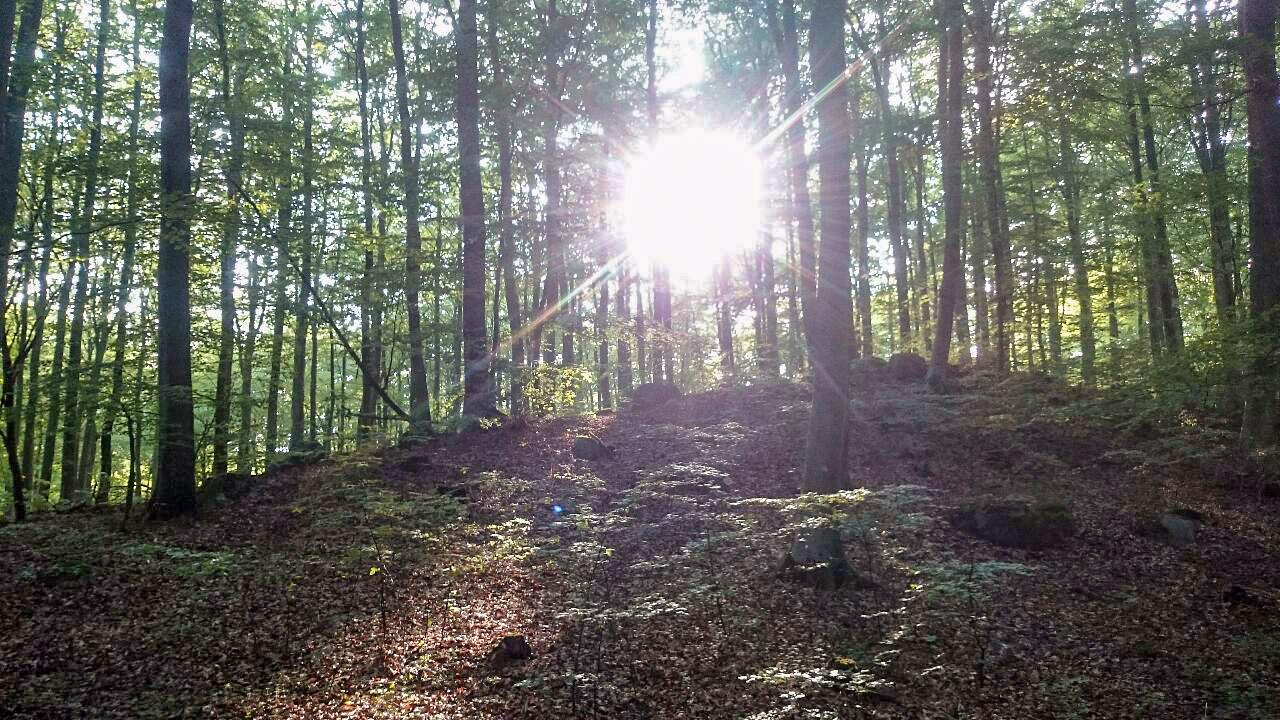 Det finns massor av svamp i bokskogarna runt Brösarp.