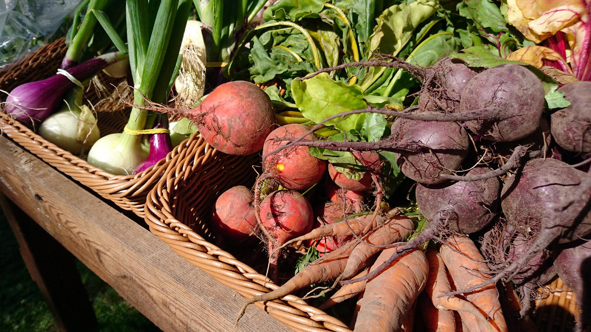 Ekologiska rödbetor, gulbetor och morötter kostar 20 kr bunten. Röd och gul lök 15 kr knippet.
