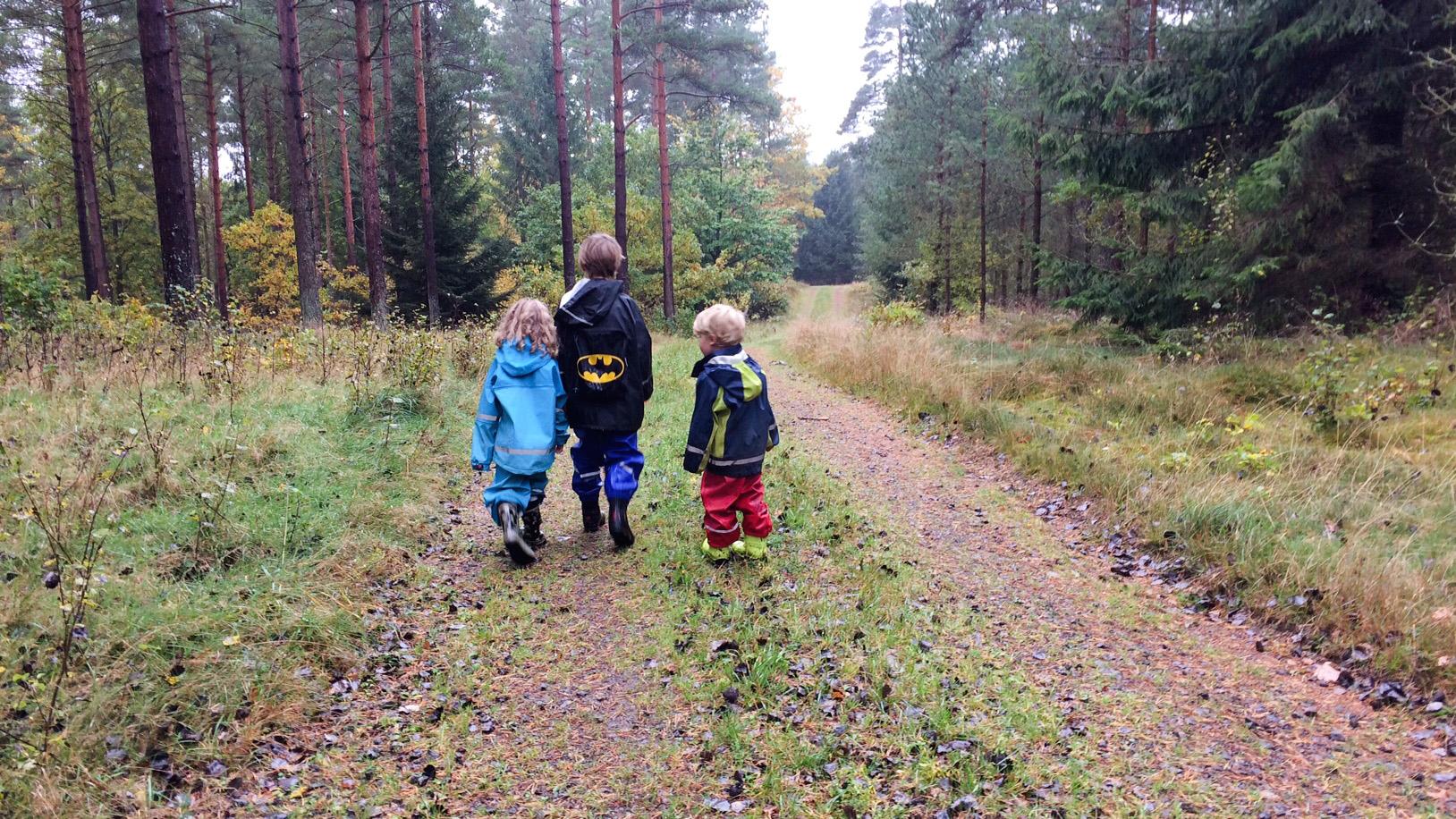 Svampskogen mellan Brösarp och Eljaröd brukar vara ett säkert tillhåll för god svampskörd.