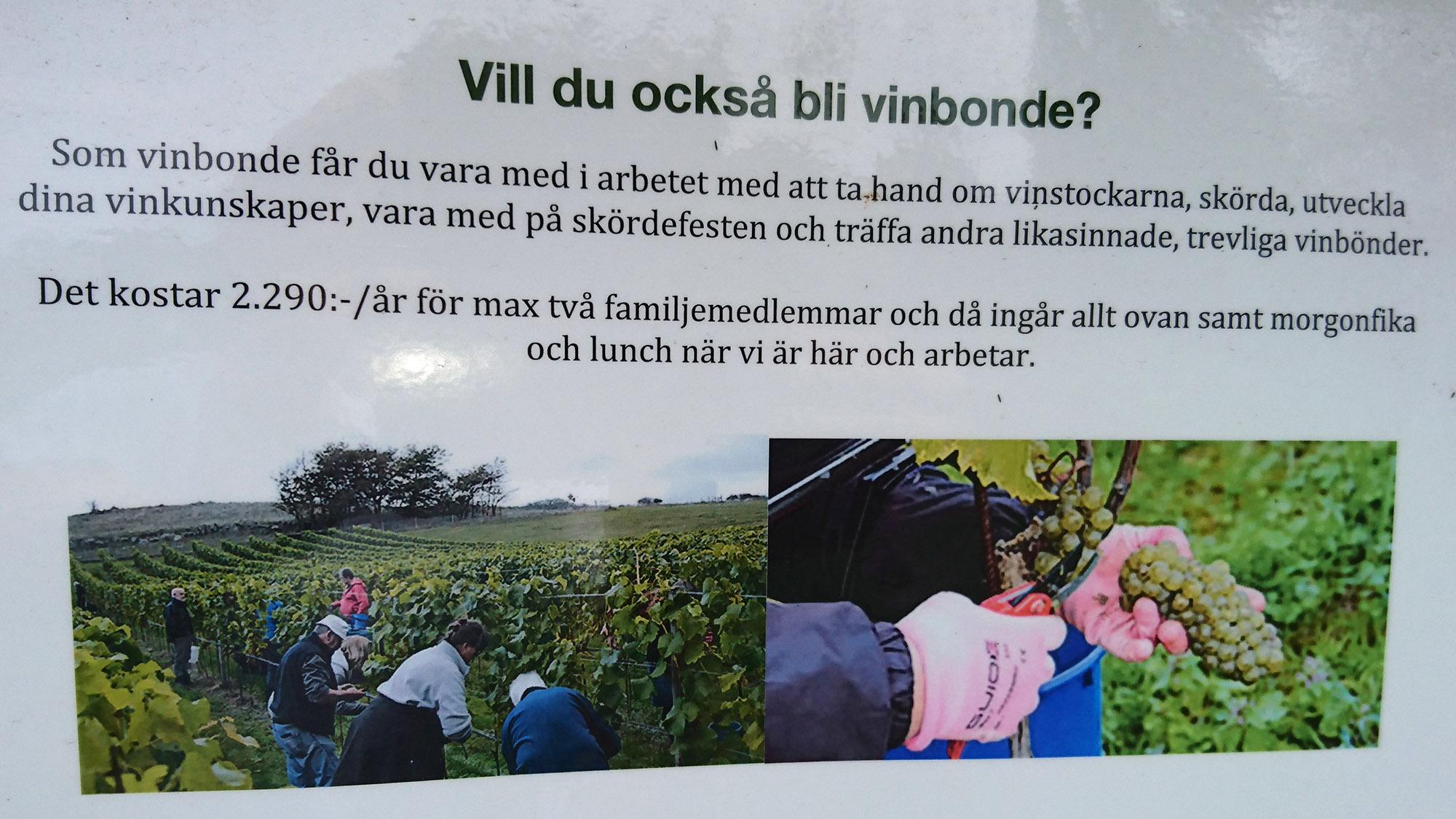 Det finns många vinbönder på Skepparps Vingård, och ännu fler kan det bli.