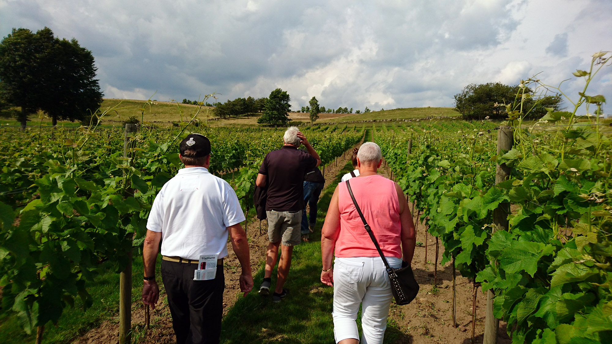 Vandringen går genom de 7 000 vinstockarna som står i rader på vingårdens två hektar.